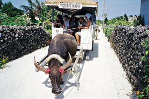 竹富島の水牛車の写真(wikipediaより)